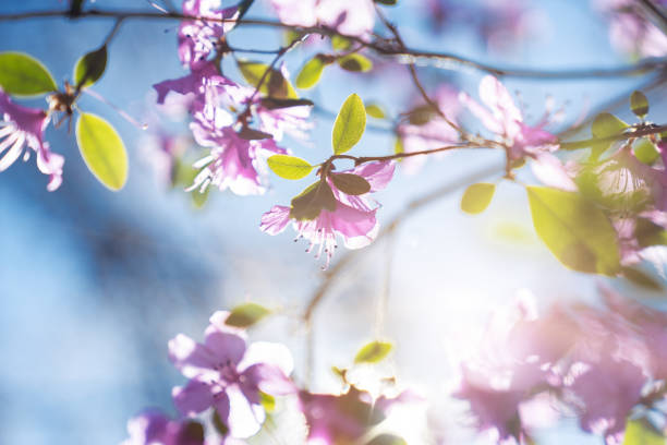 Pink flowers on the blue sky background stock photo