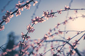 istock Pink flowers on the sky background 1215097245