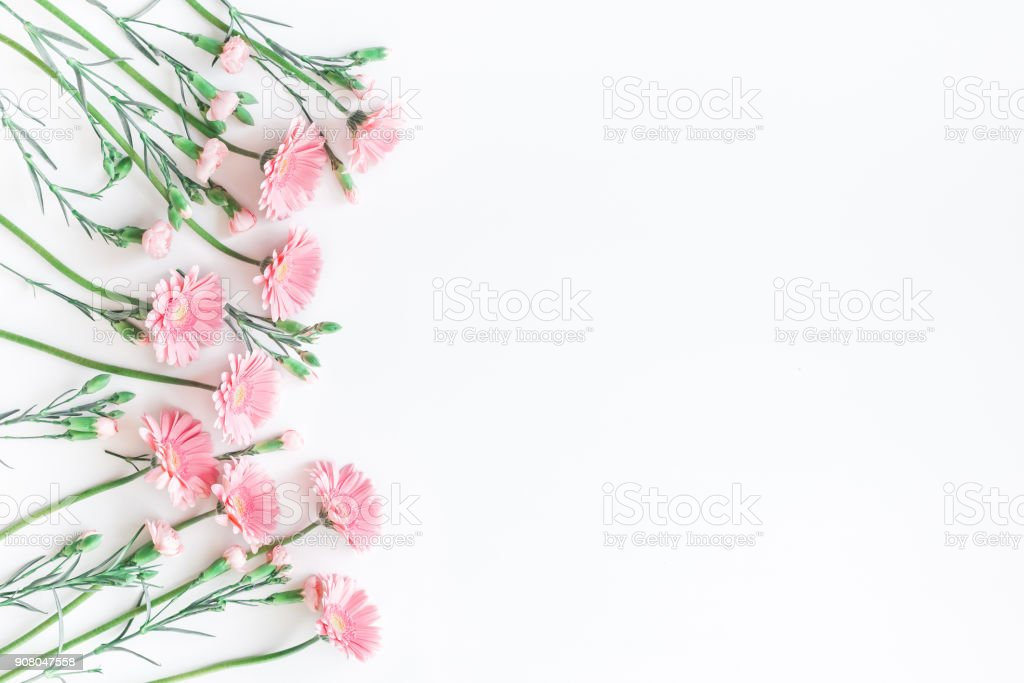 Pink flowers on white background. Flat lay, top view stock photo