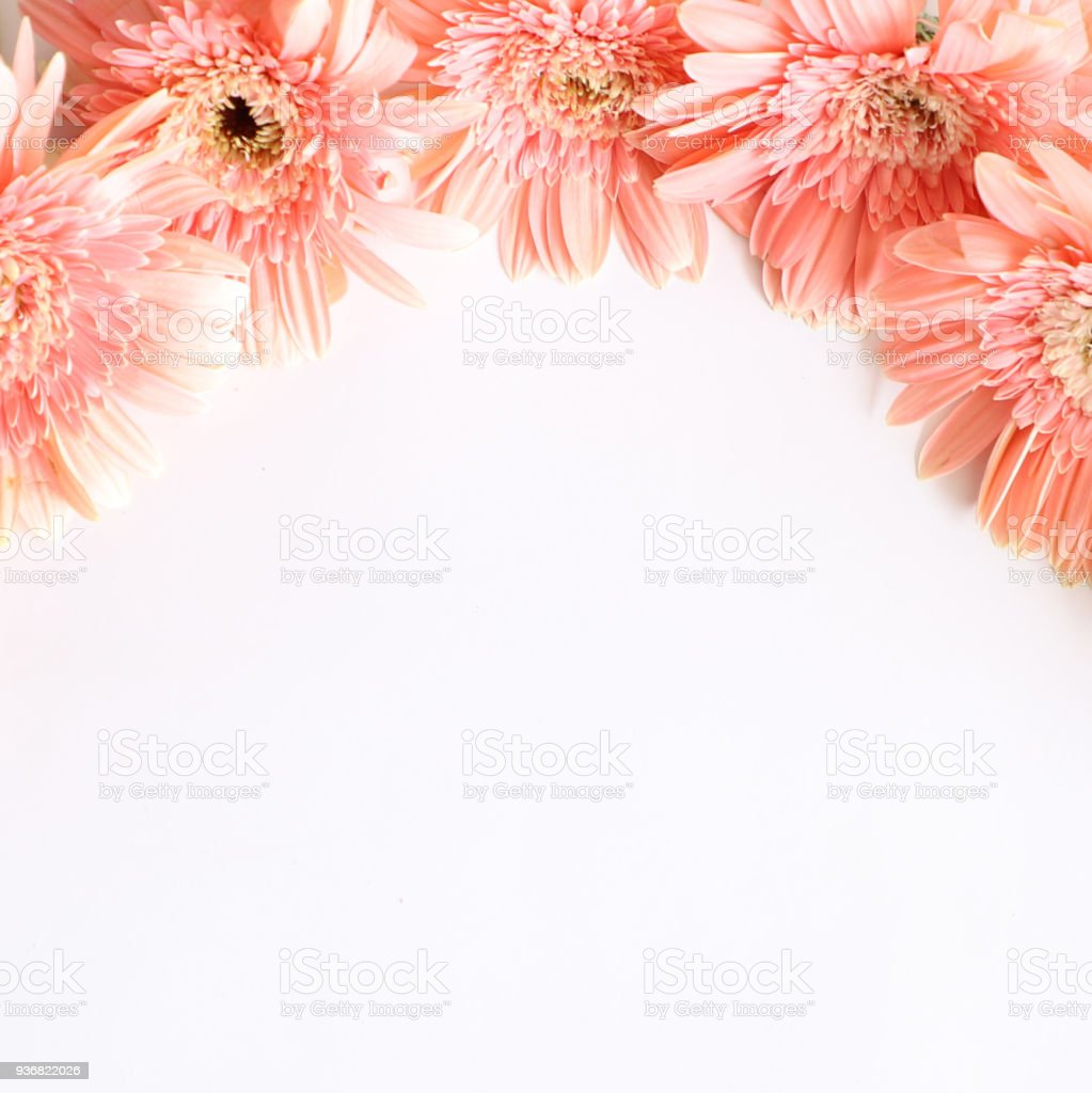 Pink Flowers On White Background For Anniversary Birthday Wedding