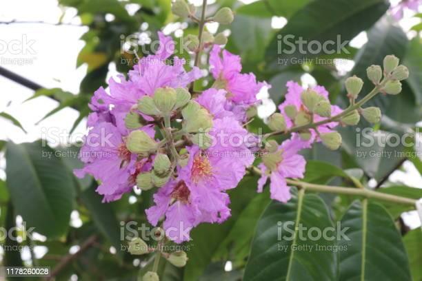 Pink flowers picture id1178260028?b=1&k=6&m=1178260028&s=612x612&h=gndthkcnnp7gvslmj60cnbbzjwlvhn55ohb0vqfcdbg=