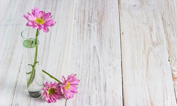 Rosa Blumen – Foto
