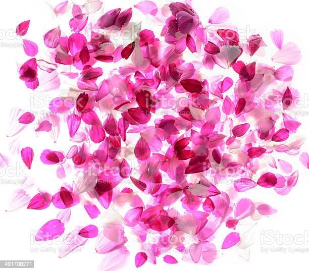 Pink flowers picture id491708271?b=1&k=6&m=491708271&s=612x612&h=fkdisus6tprgsidhzdl3be7o1 3i320fxffeklsjihk=