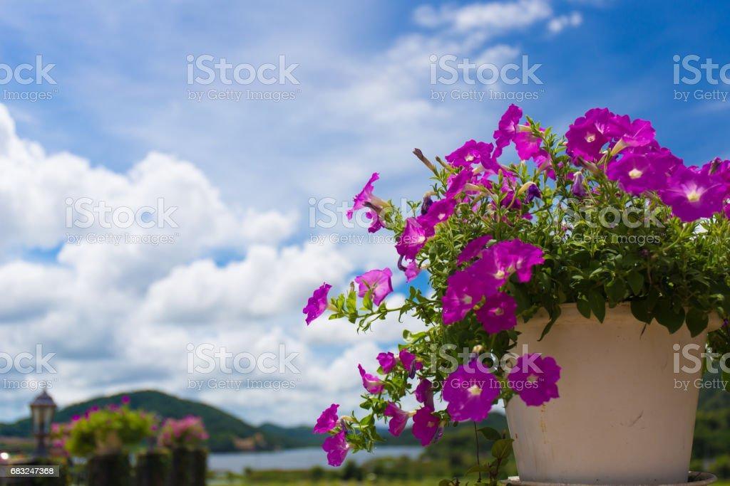 Pink flowers 免版稅 stock photo