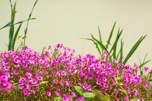 粉紅色的花朵 照片檔及更多 光 照片