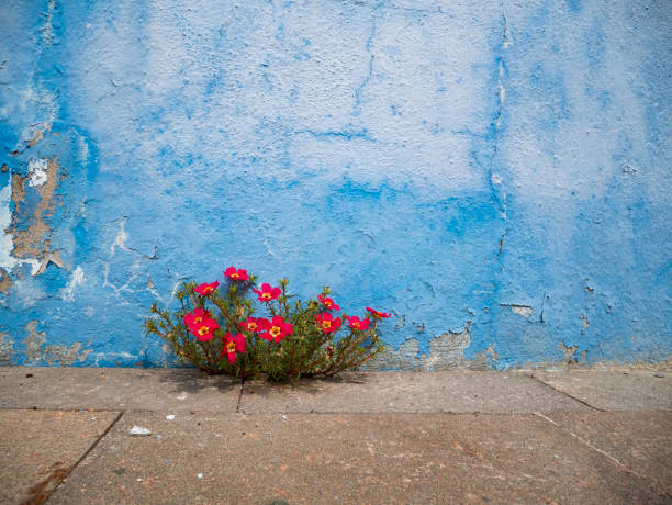 Pink flowers plant growing on crack in pavement background, perseverance concept stock photo