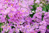 pink flowers realistic painting effect by photoshop