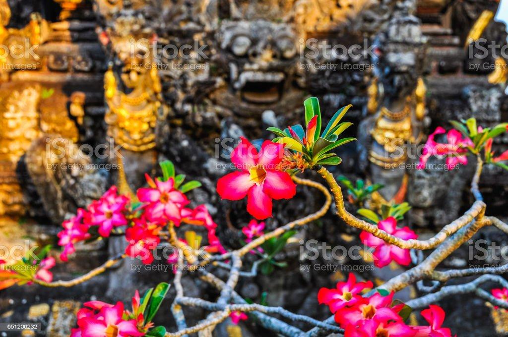 Pink flowers Saraswati Temple in Ubud, Bali stock photo