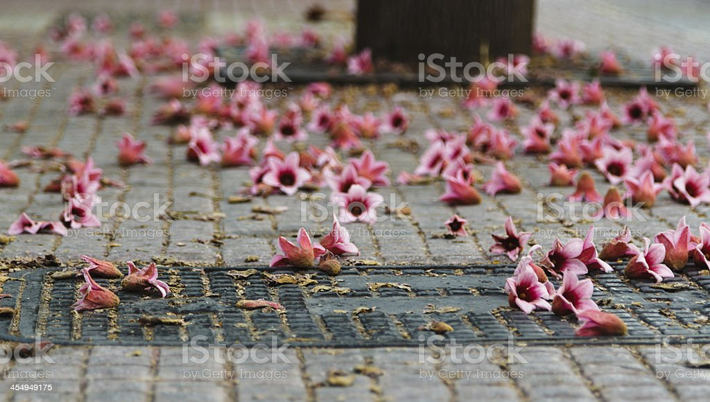 Pink flowers scattered on the side walk stock photo