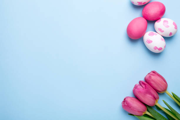 Pink flowers tulips and easter eggs on a blue background picture id1132994881?b=1&k=6&m=1132994881&s=612x612&w=0&h=v80jdqfyuzlgijuj3hwr0r7jrltaclvhw5w2yhbbe6c=