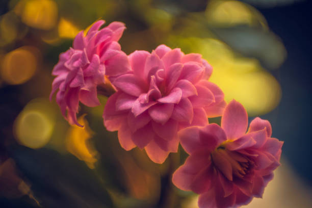 Pink flowers with blurry background stock photo