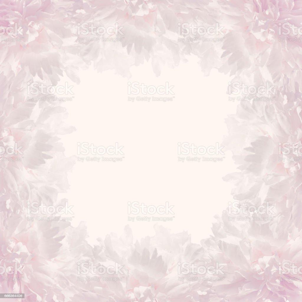 pink frame of lush pastel peonies stock photo