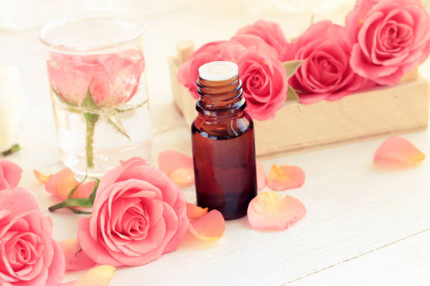 Pink fresh rose flowers and petals, essential oil in dark glass bottle. stock photo