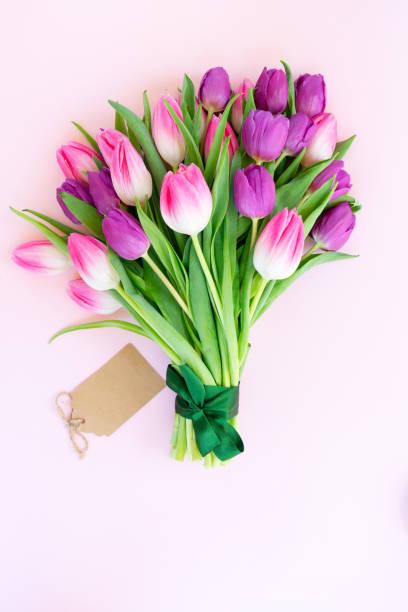 Pink fresh tulips stock photo