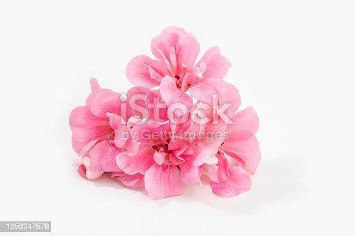 istock Pink geranium flower isolated 1253247576