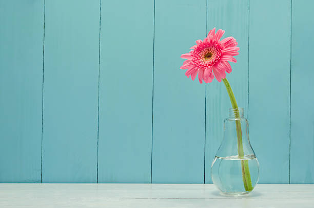 Pink Gerbera daisy flower in bulb glass vase Pink Gerbera daisy flower in bulb glass vase on white and wooden background single flower stock pictures, royalty-free photos & images