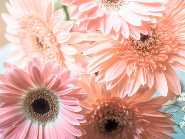 Pink gerbera daisy flowers bouquet stock photo