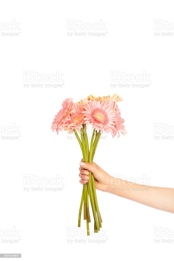 Pink Gerbera Dasies stock photo