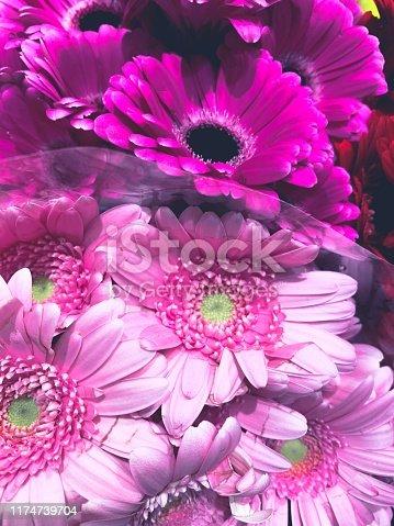 Pink Gerbera Flowers. Flowers Full Frame