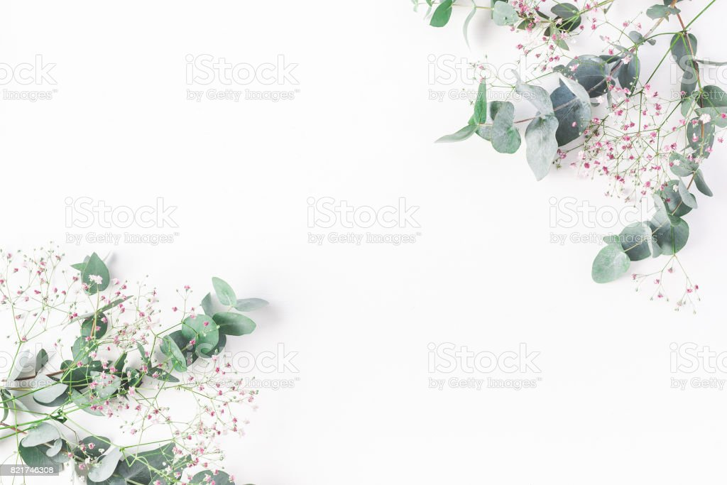 Pink gypsophila flowers and eucalyptus branches. Flat lay, top view stock photo