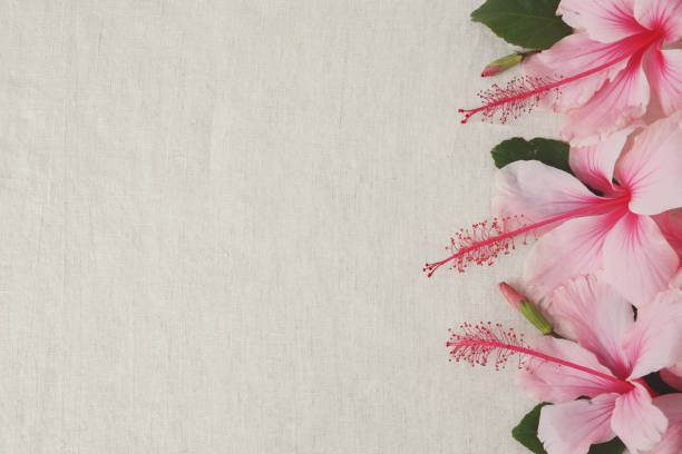 Pink Hibiscus flowers on linen, copy space background, selective focus, vintage tone stock photo