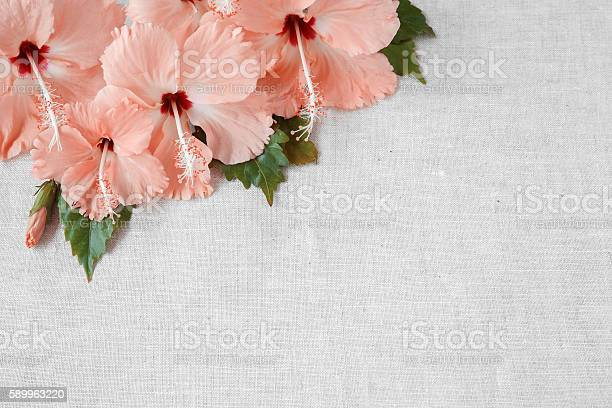 Pink hibiscus flowers on linen copy space background selective picture id589963220?b=1&k=6&m=589963220&s=612x612&h= txryq1iqrykr21iomj58ezlmpmokfika4kcsjqhpwk=