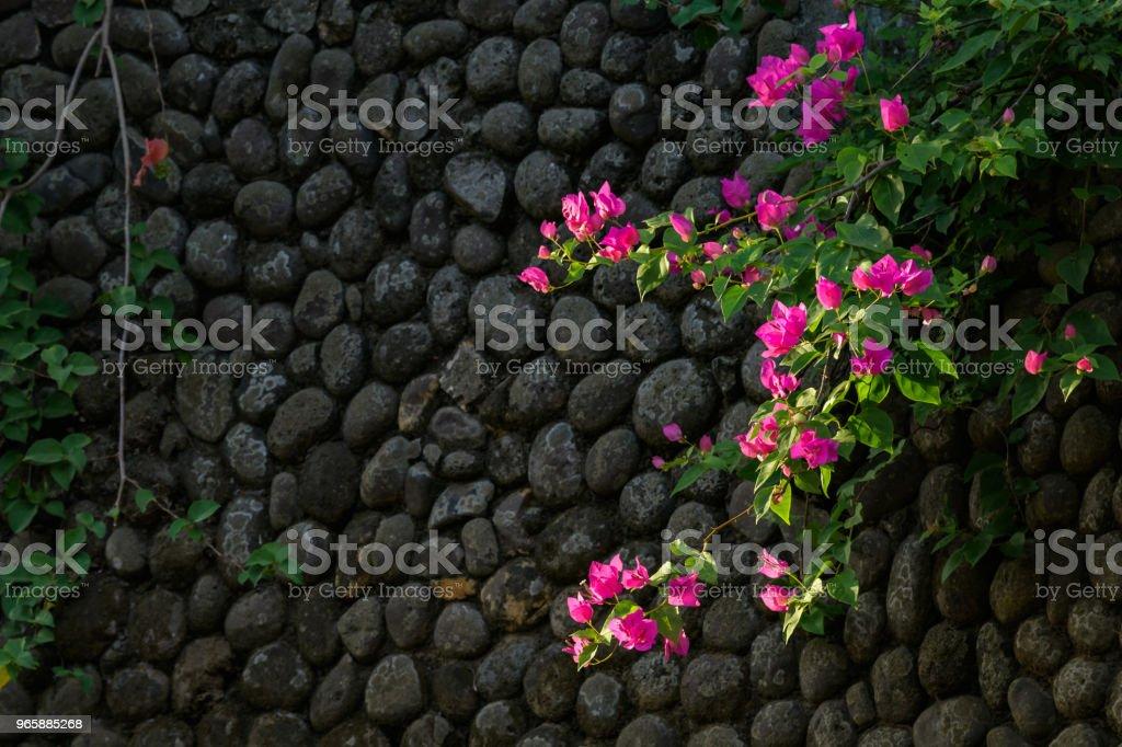Roze hoogtepunten op zwart - Royalty-free Achtergrond - Thema Stockfoto