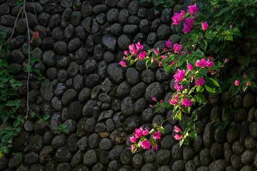Roze Hoogtepunten Op Zwart Stockfoto en meer beelden van Achtergrond - Thema