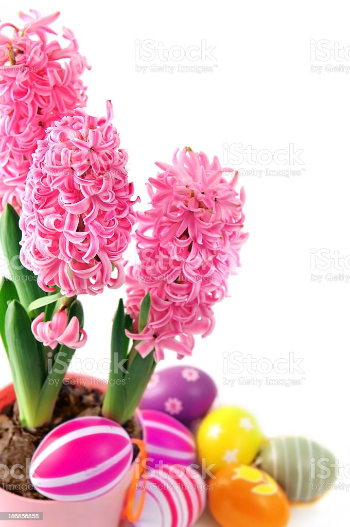 Pink Hyacinth Flower Pot With Easter Egg Stock Photo & More Pictures ...