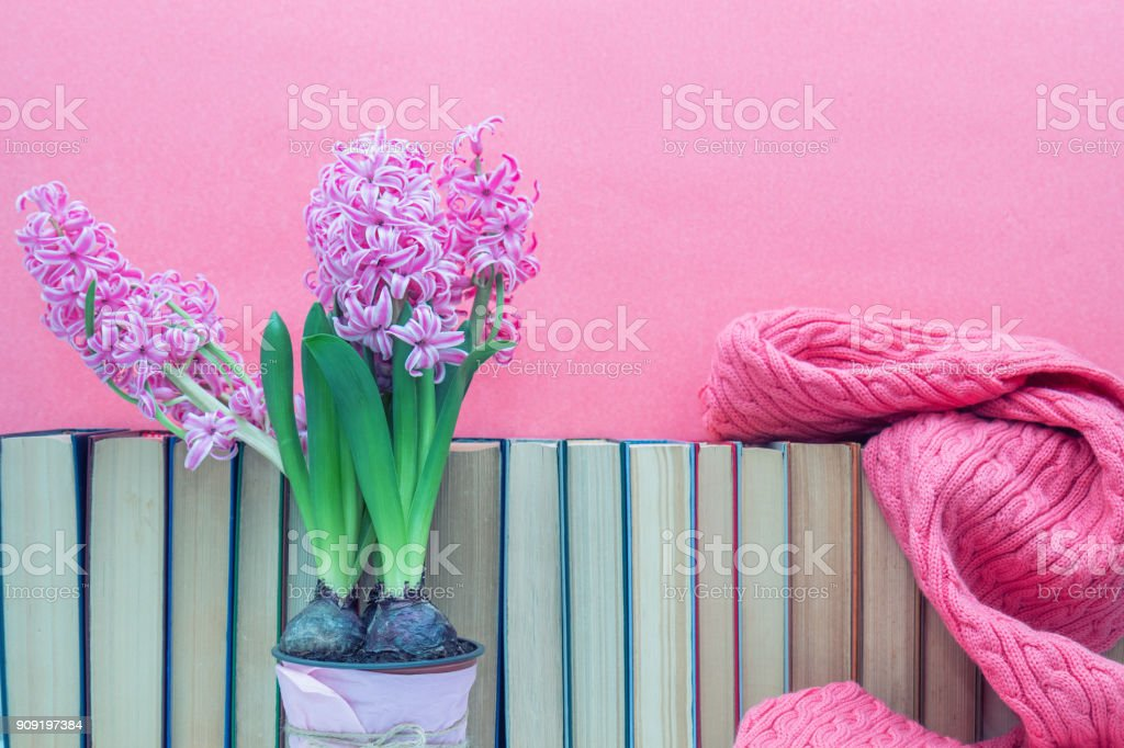 Pink hyacinths in pot infront of pile of books at pink background. Beautiful spring pink background. Copy space. stock photo