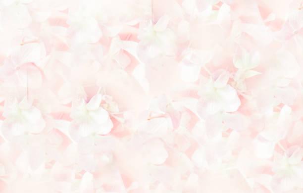 粉紅色的丁香花花束。軟篩檢程式。 - 女性化 個照片及圖片檔