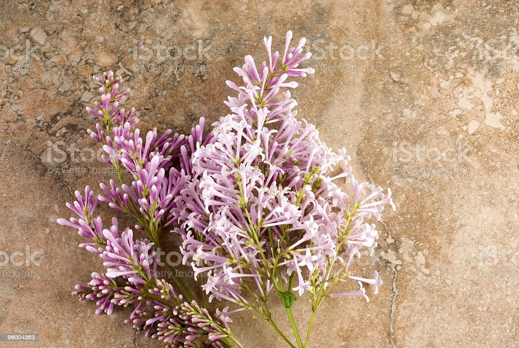 Pink Lilac Vintage Background royalty-free stock photo
