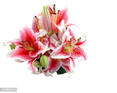 Link lilies on white