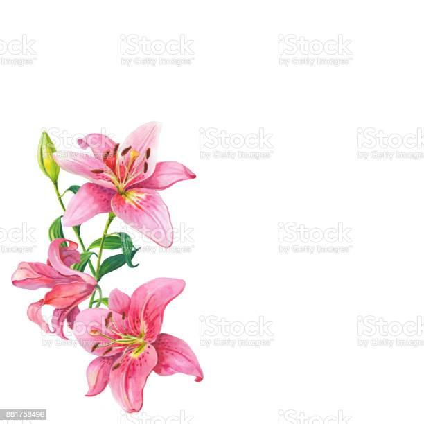 Pink liliesfloral watercolor flowers wreath picture id881758496?b=1&k=6&m=881758496&s=612x612&h=0s80jysgqrfn qi2b4wiaqef3ywjjjtvatttukfrnws=