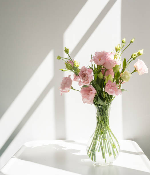 Pink lisianthus flowers in glass vase with sunlight and shadows stock photo