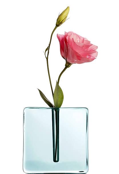 pink lisiantus in blauer vase auf weiß - vase glas stock-fotos und bilder
