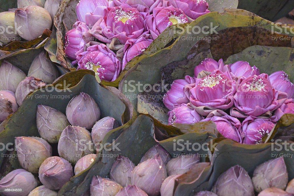 Pink lotus Availability stock photo