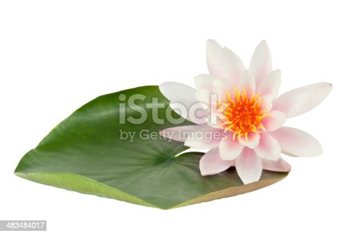 Pink Lotus flower  with leaf isolated on white background. Clipping path included.