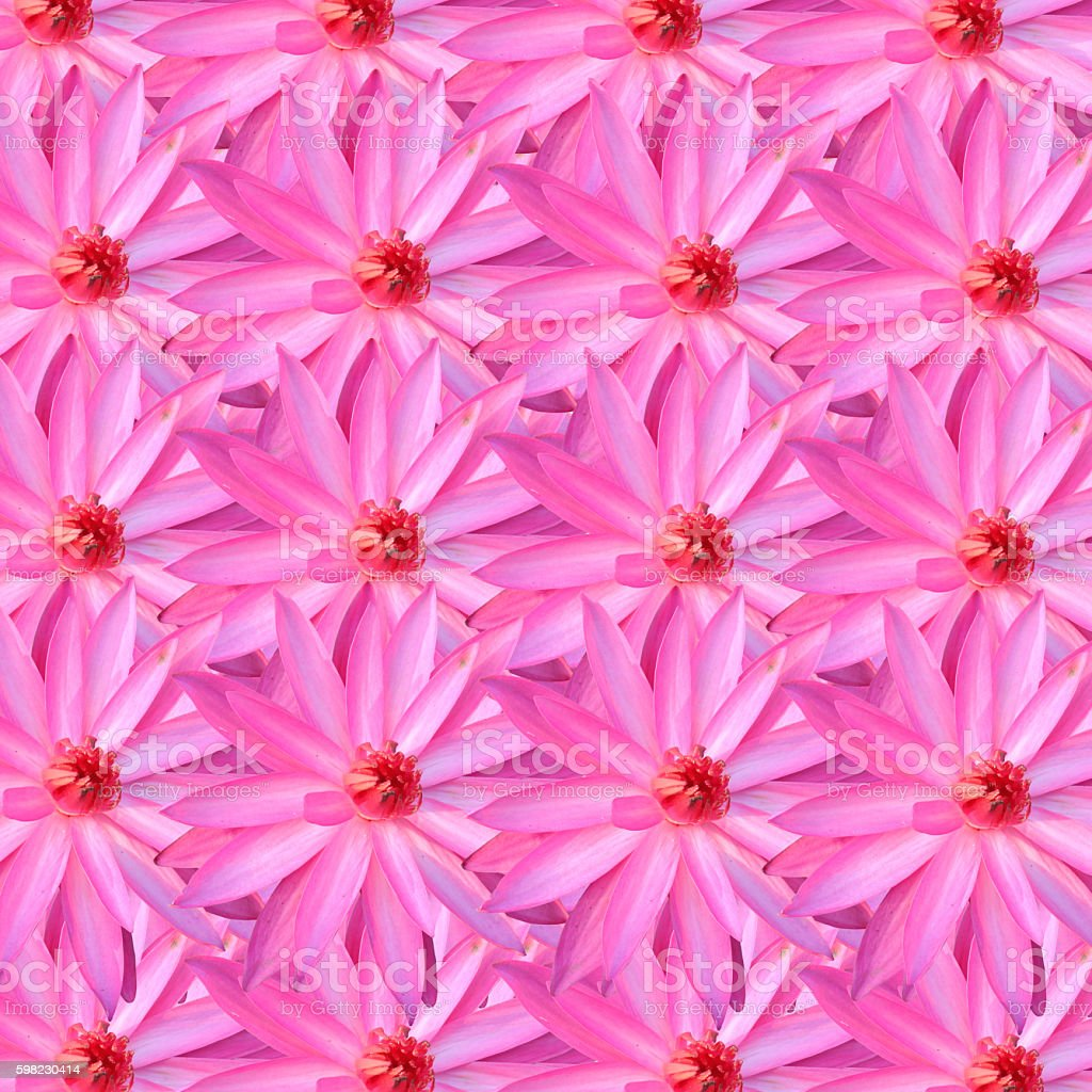 pink lotus for the design background. foto royalty-free
