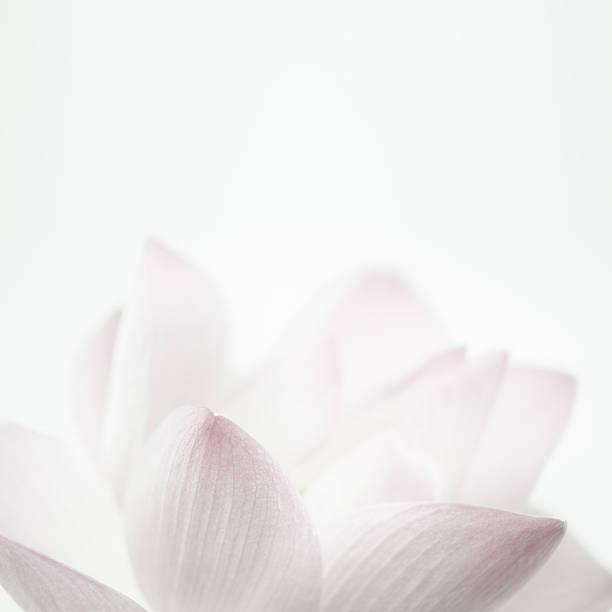 Lotus rose de couleurs douces et style d'arrière-plan flou pour - Photo