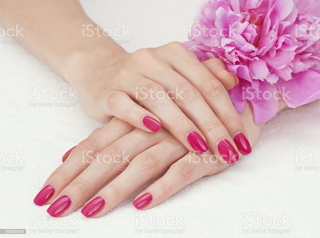 Pink manicure and a flower royalty-free stock photo
