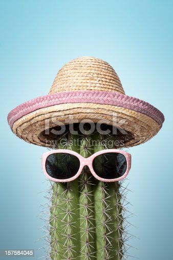 Photograph of a cactus wearing sombrero and sunglasses.