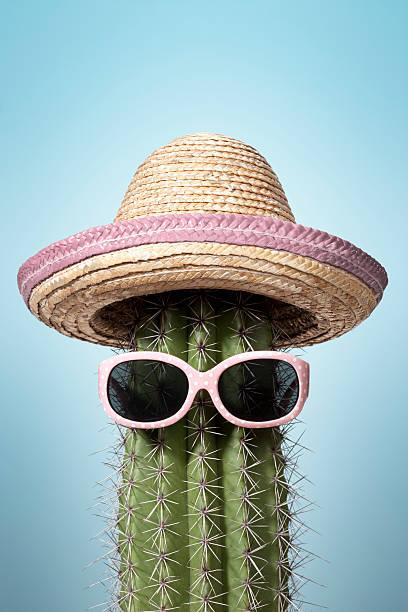Pink mexico cactus. Summer Humor Heat Holiday Sunglasses Sombrero stock photo