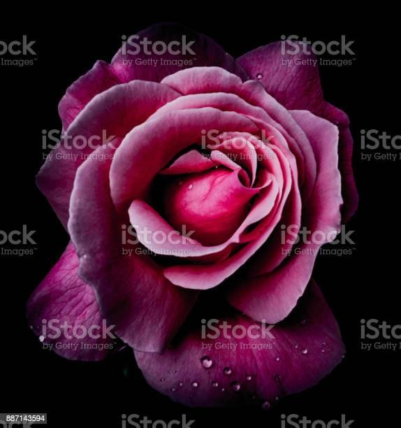 Pink on black picture id887143594?b=1&k=6&m=887143594&s=612x612&h=bpqxtbp lknqzgvp86ykfbvrmbzre4wko2rc vgvpdw=