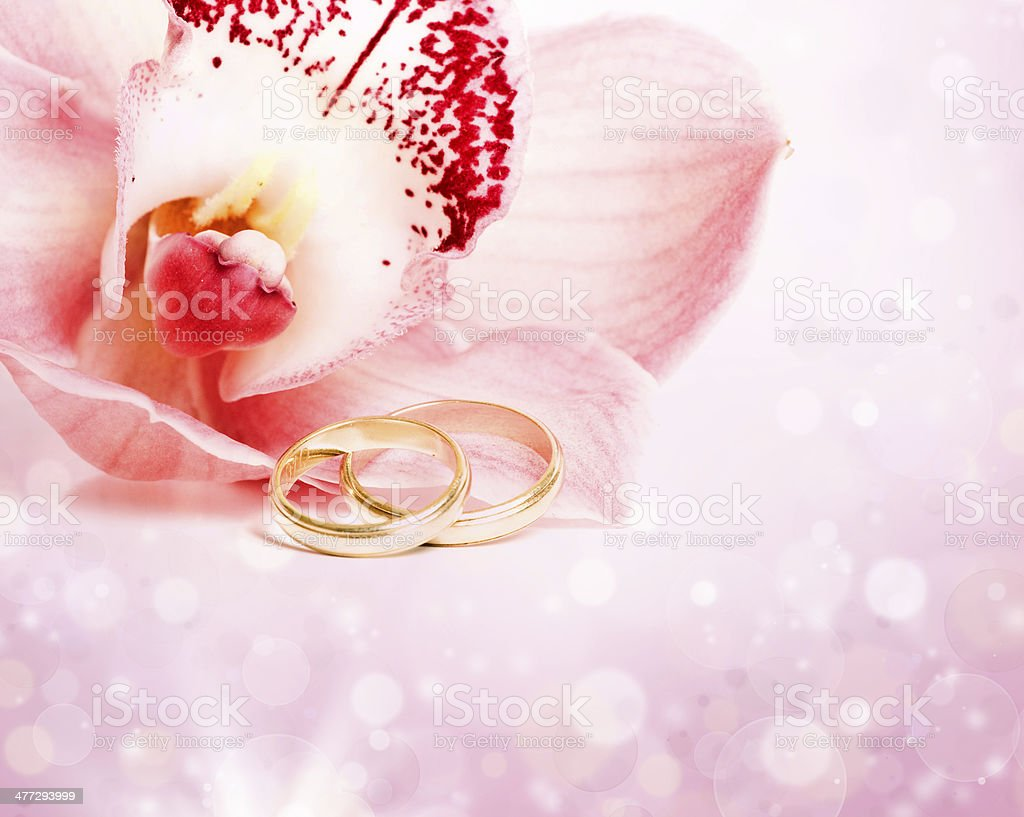 Pink orchid and wedding rings royalty-free stock photo