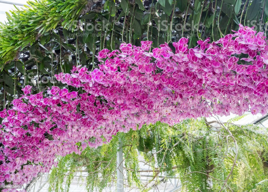 Pink orchid arch. stock photo