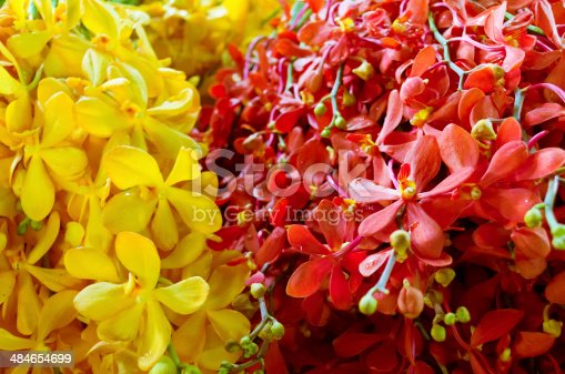 Bundles of yellow and red orchid bouquets, flower market.