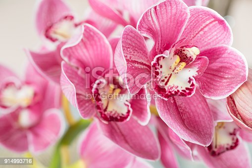 Pink orchid flower on light background. Light pastel poster with orchids phalaenopsis