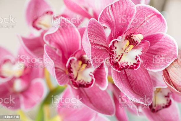Pink orchid flower on light background light pastel poster with picture id914993716?b=1&k=6&m=914993716&s=612x612&h=g0r4mtic7ddyd msvosygvjufgxqsaw 8dtjj7ykw a=