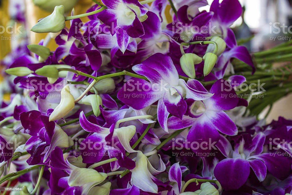 Pink orchid flower. royalty-free stock photo